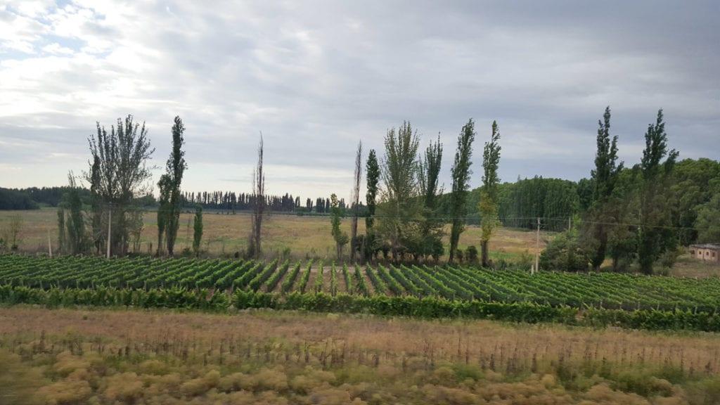 Mendoza to Santiago Bus Scenery, Mendoza to Santiago Bus Review, Mendoza Wineries