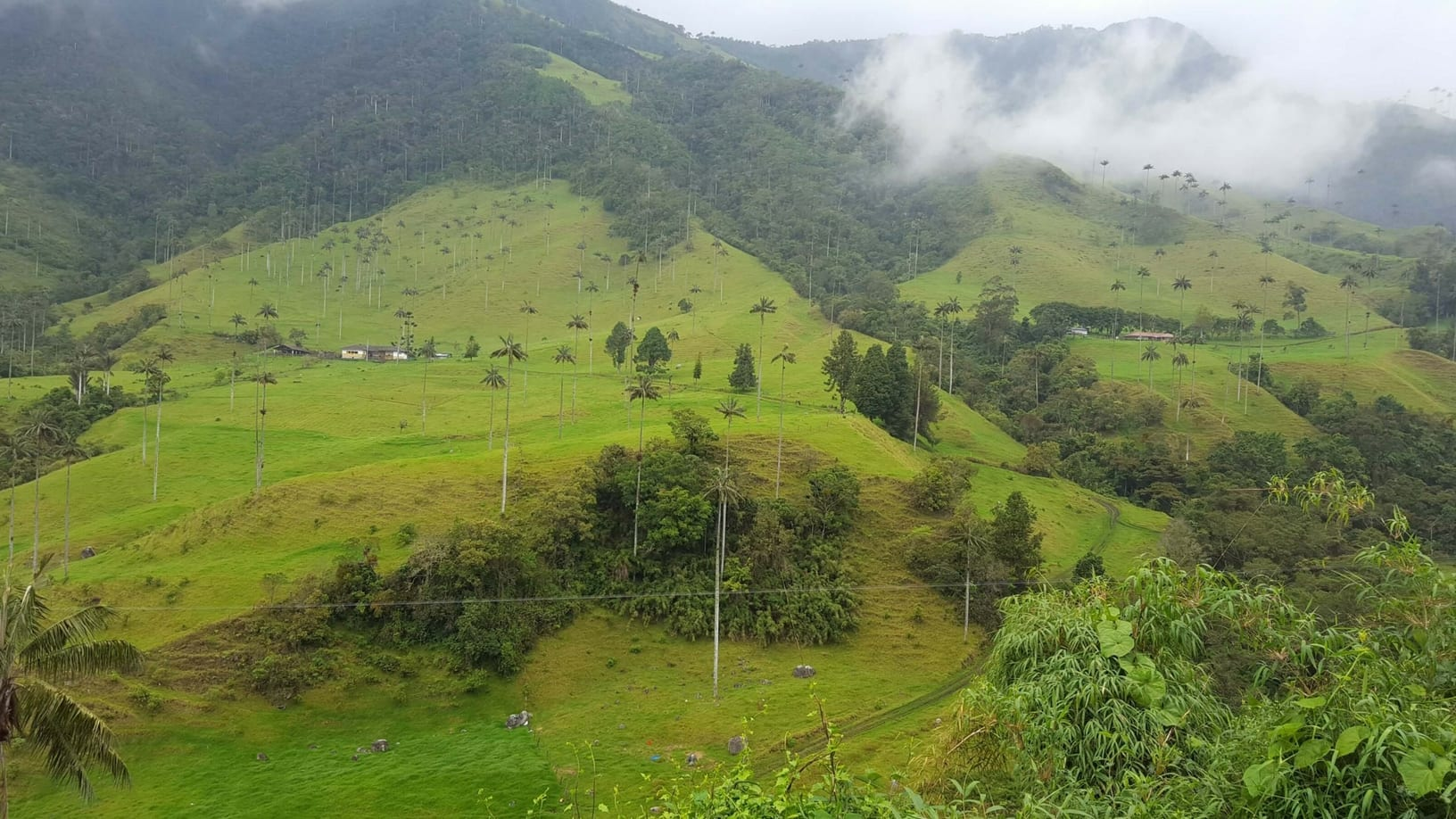 Beautiful green Salento countryside
