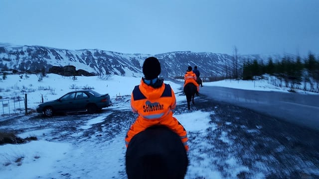 Tölting on the Icelandic Horse