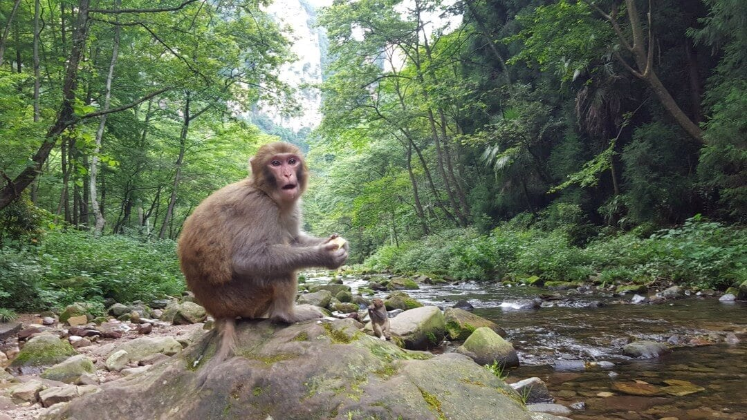 Avatar+Mountain+Wildlife+Monkey