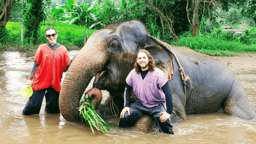 An-image-showing-best-place-to-see-elephants-Chiang-Mai