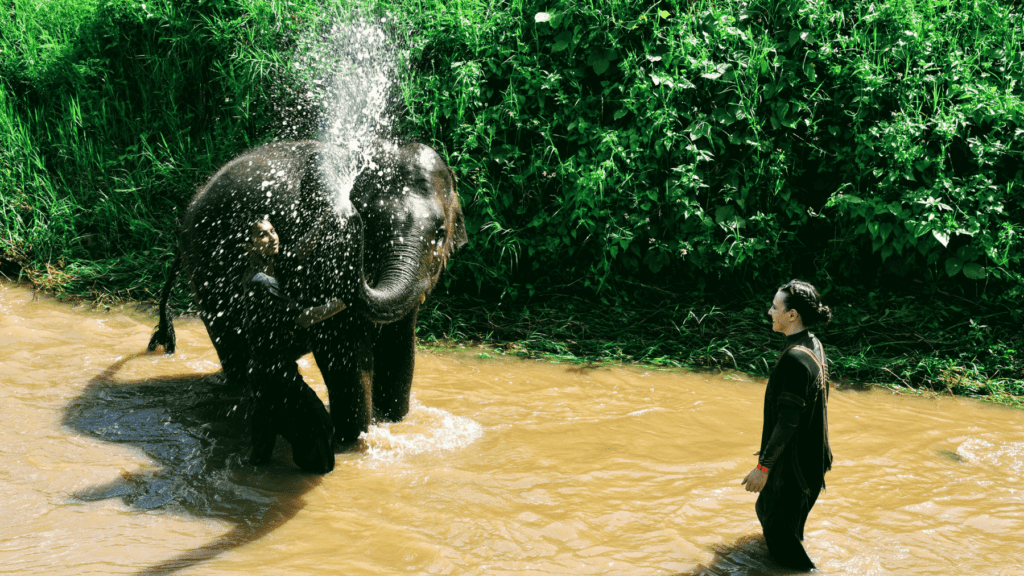 An-image-showing-bathing-with-the-elephants-at-Rantong-the-best-place-to-see-elephants-in-Chiang-Mai