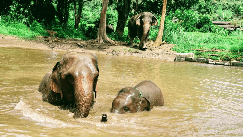 Best Elephant Sanctuary Chiang Mai