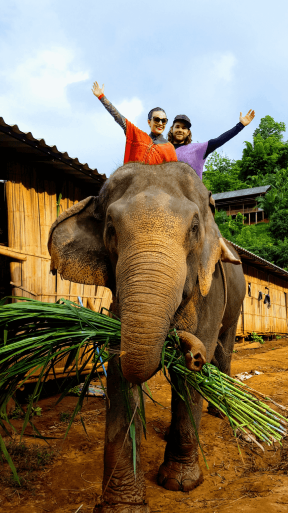 An-image-showing-whether-ethical-to-ride-elephants-Chiang-Mai