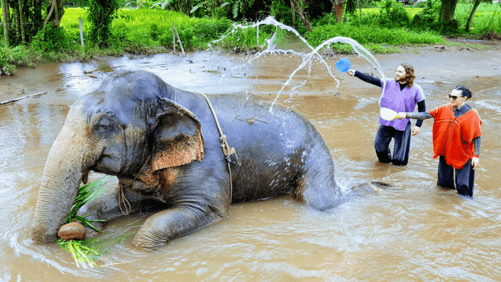 An-image-showing-the-best-elephant-santuary-chiang-mai