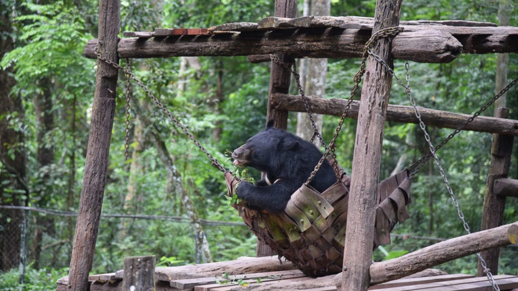 Bears at Kuang Si Falls