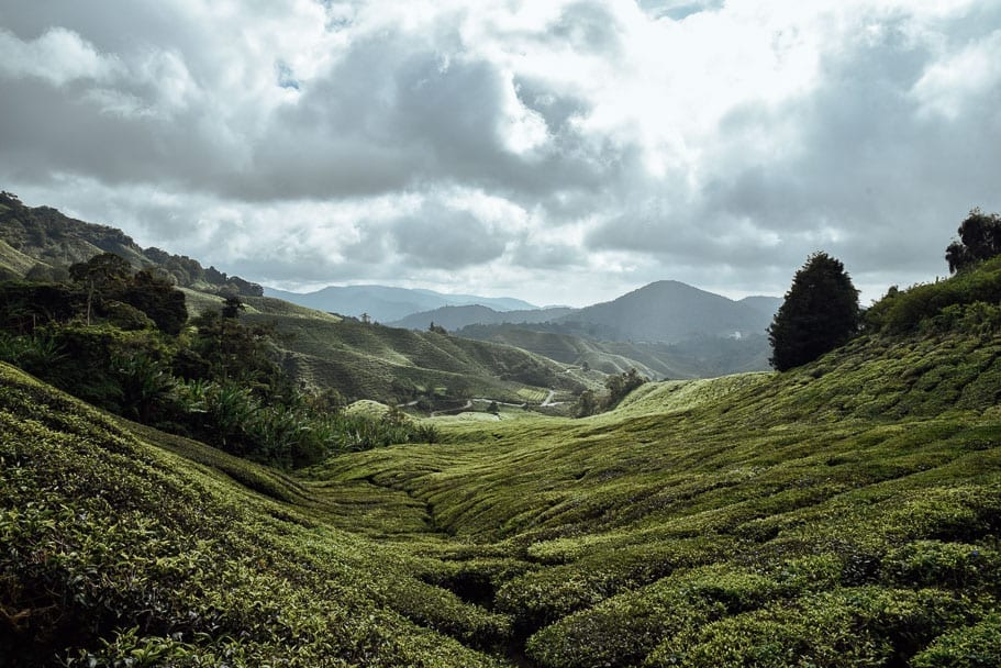 What to do Cameron Highlands