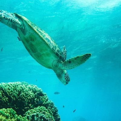 How to Swim with Turtles at Apo Island, Philippines