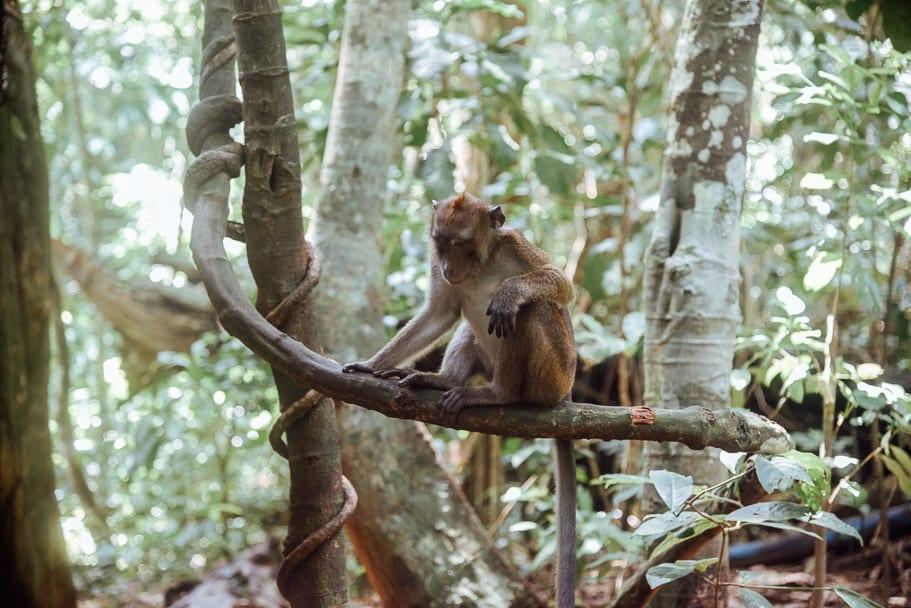 Monkey Underground River Palawan