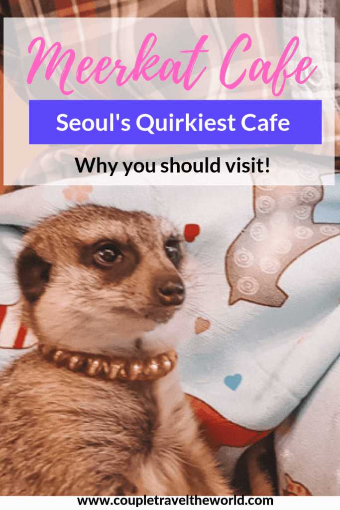 Meerkat-Cafe-Seoul-Hongdae