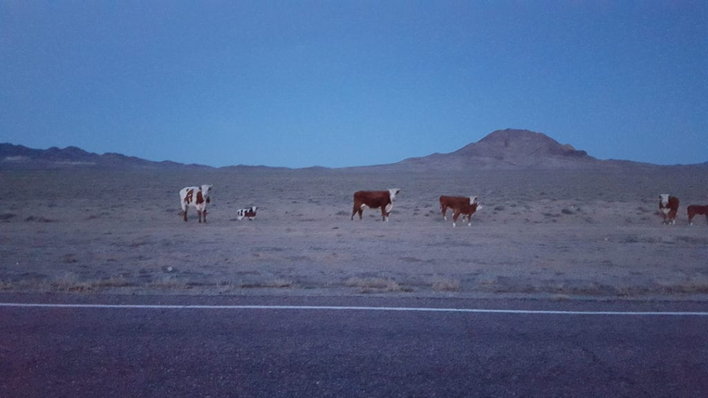 extraterrestrial-highway-area-51-cows
