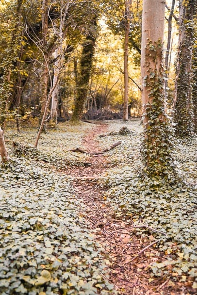 wandlebury-Country-Park-walks