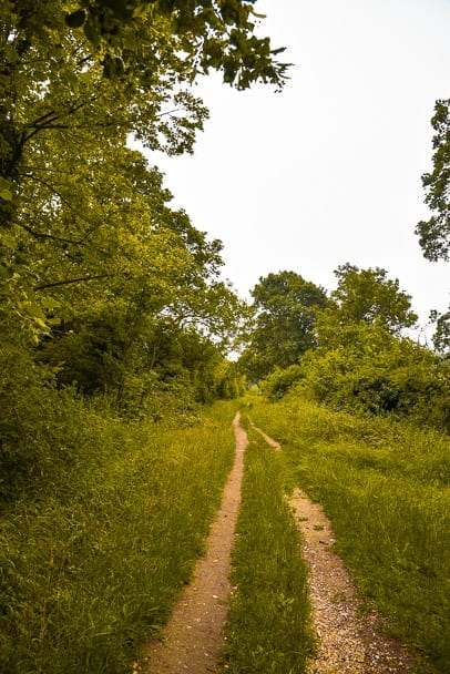 Wandlebury-Country-Park-wildlife