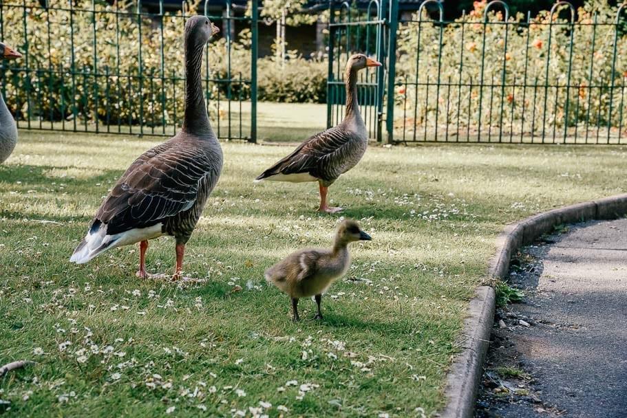 kelsey-park-birds-london