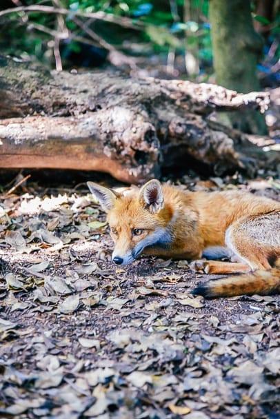 kelsey-park-english-wildlife-london