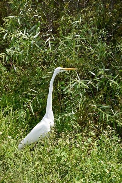 Anhinga-Trail-Everglades