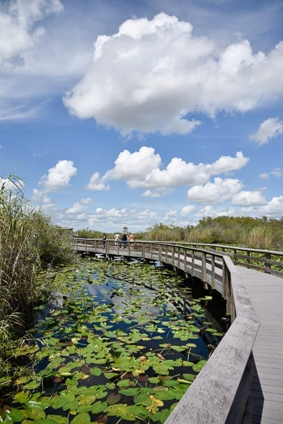 Anhinga-Trail-Everglades-national-park