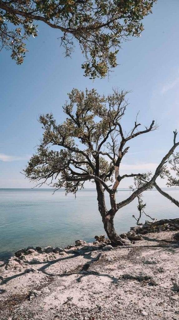 Best-Beaches-in-Islamorada