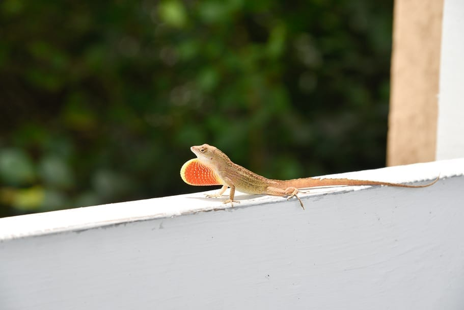 Ernest-F-Coe-Visitor-Center-wildlife