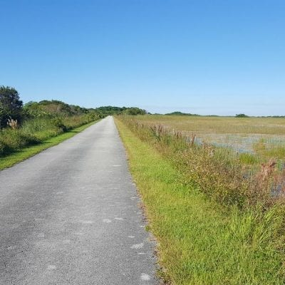 Shark Valley Trail | Facts & Tips | Everglades National Park
