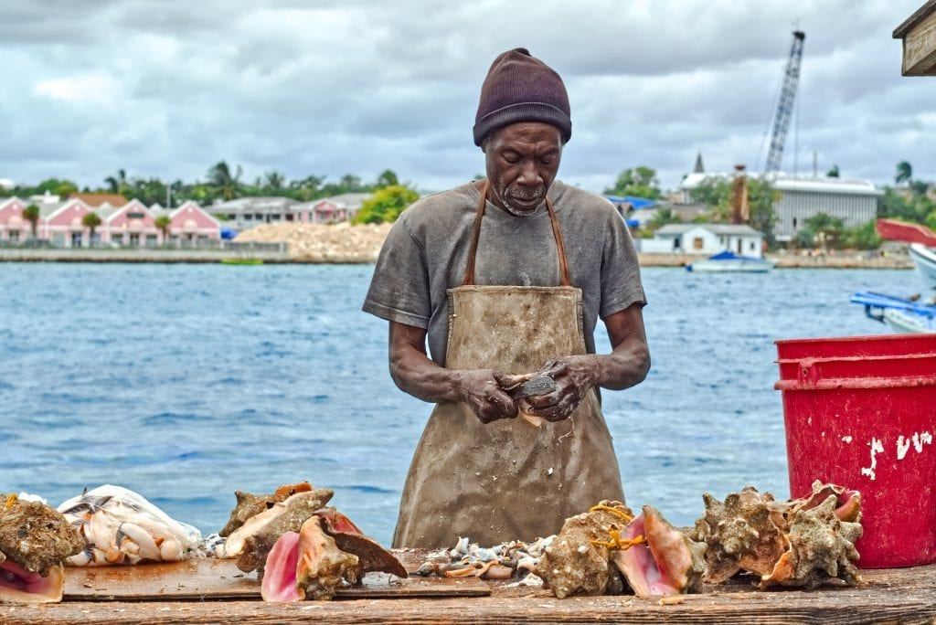 Conch-Florida-Foods