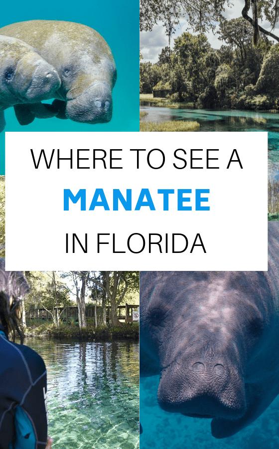 MANATEE-IN-FLORIDA
