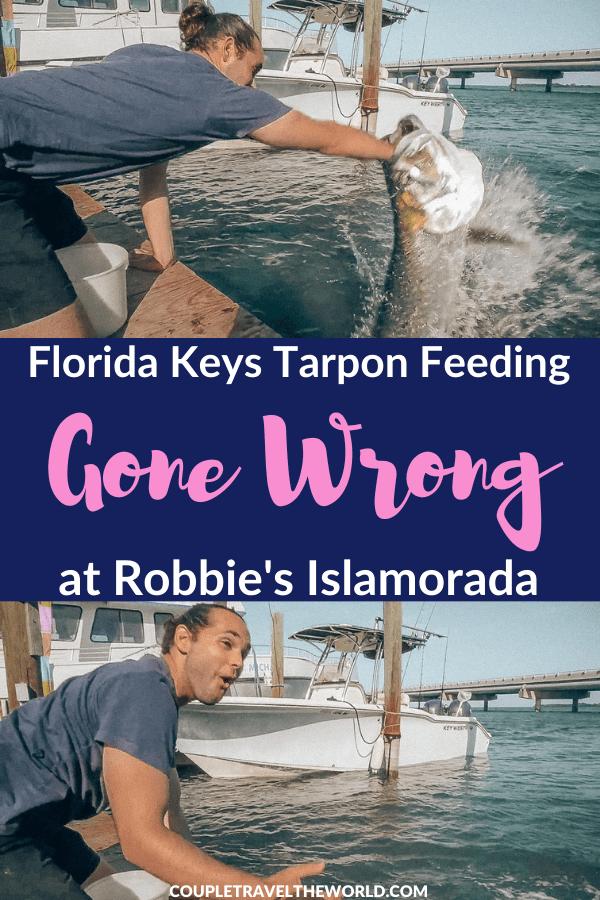 Robbies Tarpon Feeding