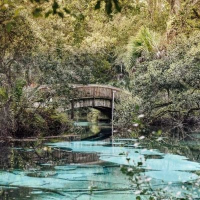 The 6 Natural Best Springs in Florida (Stunning Springs you Cannot Miss!)