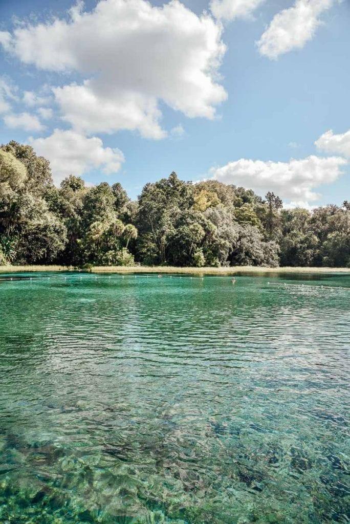 rainbow-springs-florida-swimming