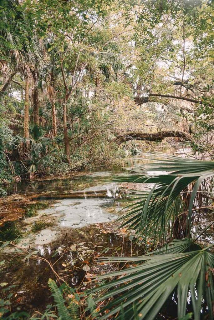 rainbow-springs-state-park-nature