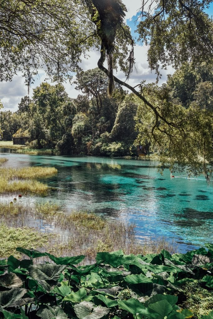 springs-in-florida-rainbow-springs