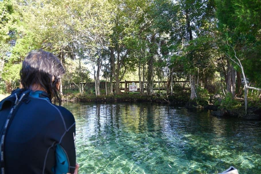 swim-with-manatees-Florida