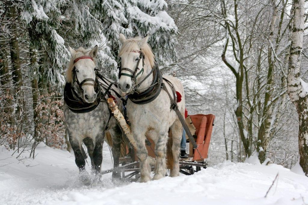 christmas-date-idea-sleigh-ride