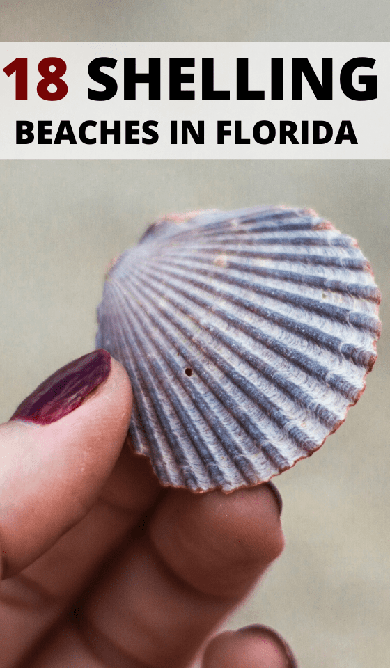 best-SHELLING-BEACHES-IN-FLORIDA