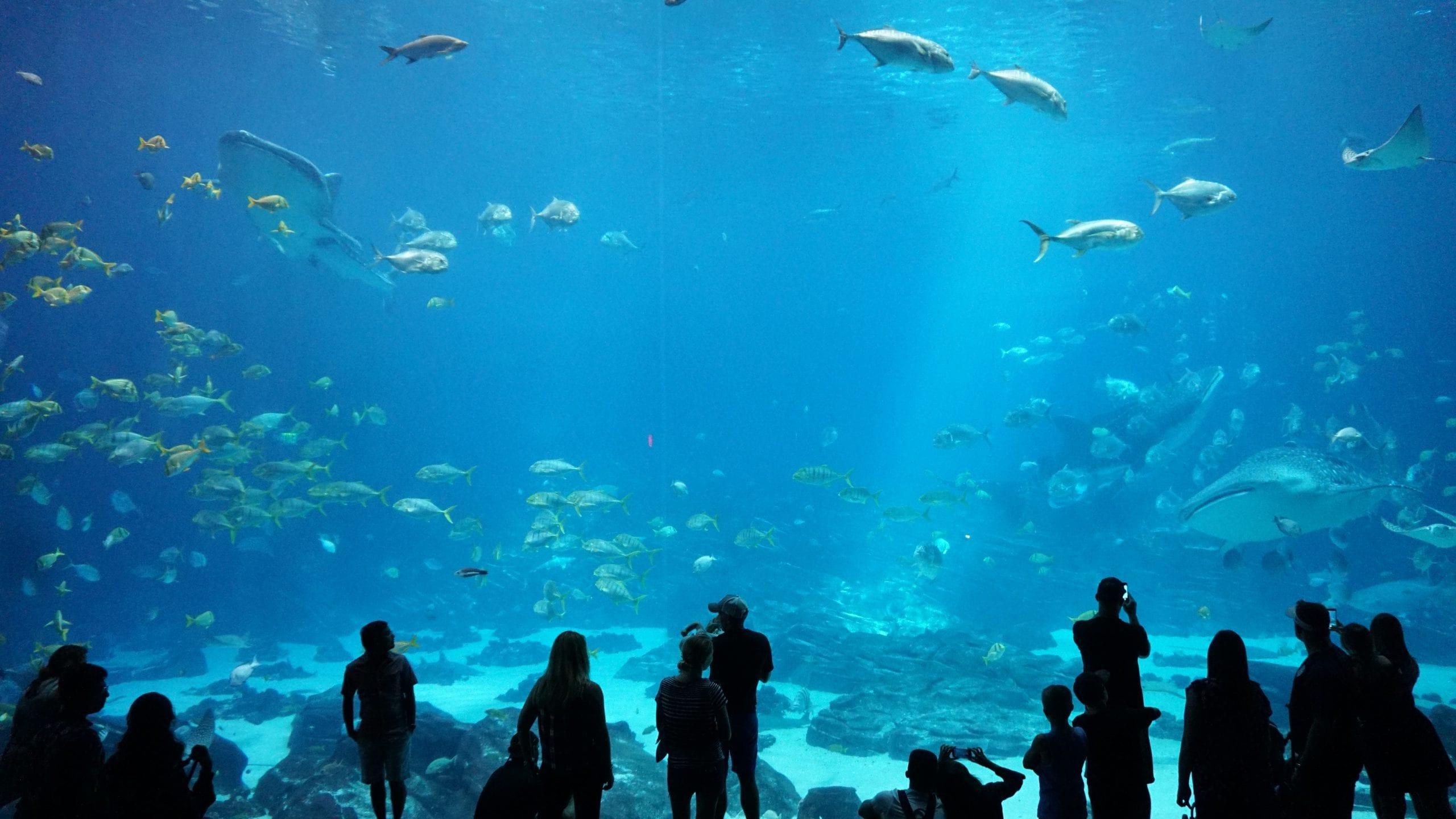 Georgia Aquarium, Atlanta, United States
