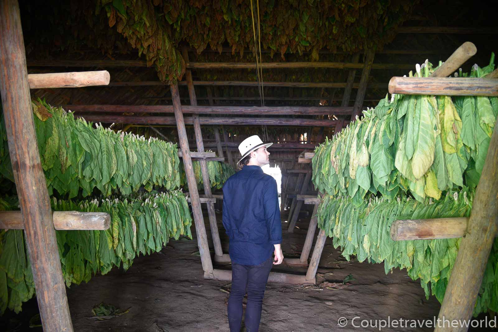 tobacco-drying-sheds