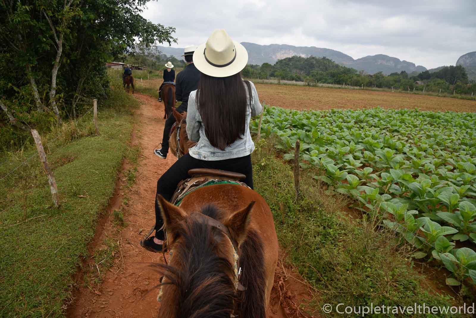 horseback-riding-vinales