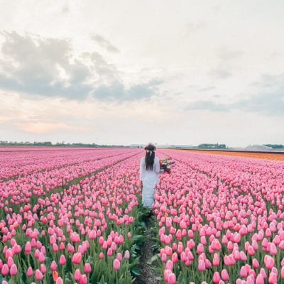 Tulip Fields in Holland: Secret Tips from a Netherlands Local!