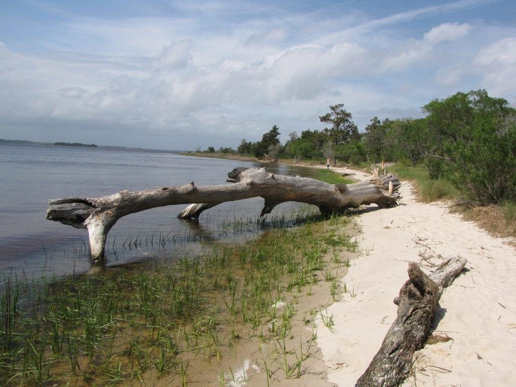 Carolina-Beach-State-Park