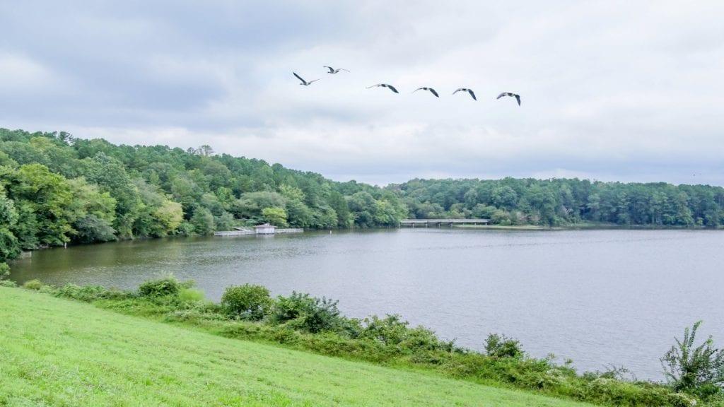Shelley Lake Park