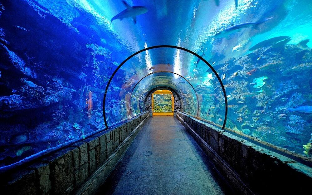 shark-bay-mandalay-bay