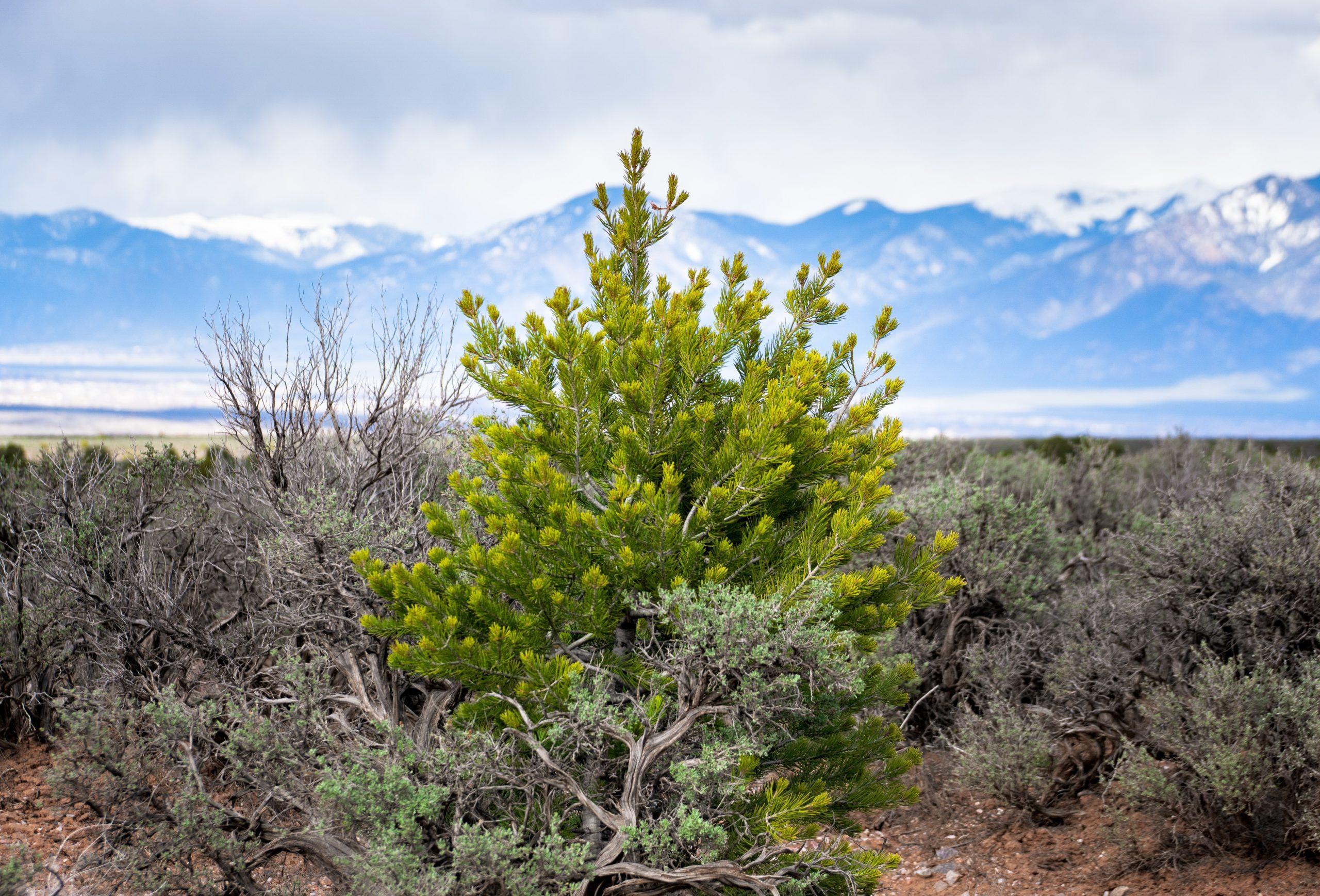 Taos-NM